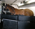 Horse Hyperbaric Oxygen Chamber was built using various grades of XLERPLATE® steel from BlueScope Steel.